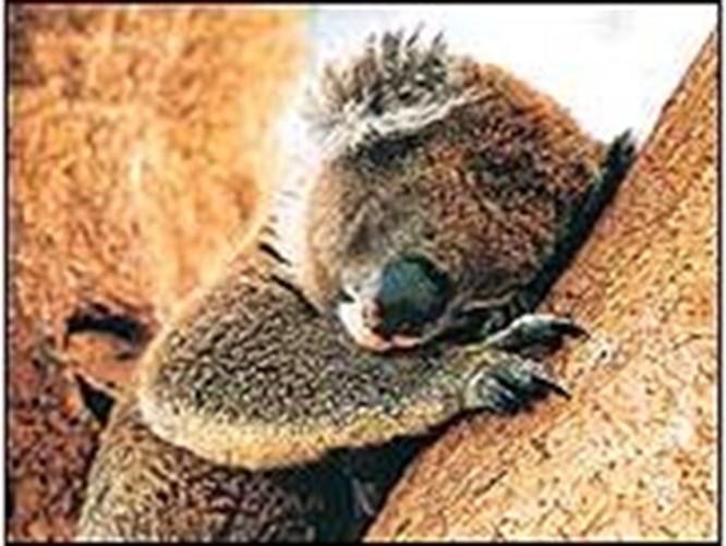 İyi uykular !
